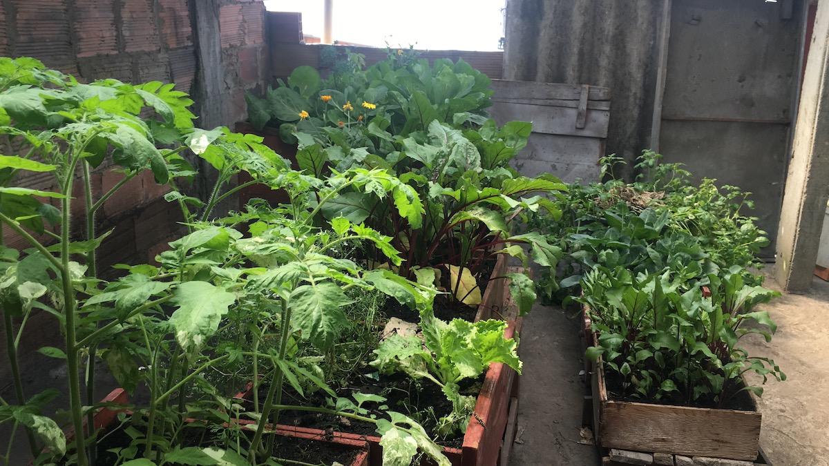 Bogotá avanza en el aprovechamiento de los residuos sólidos para la práctica de Agricultura Urbana en los hogares