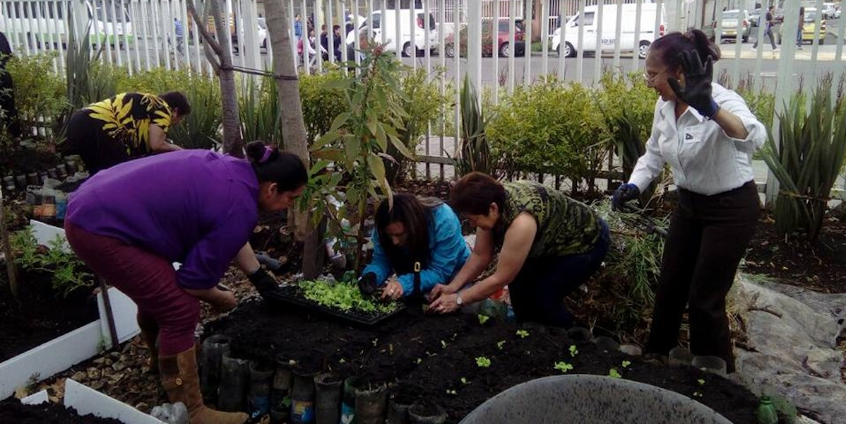 Huertas urbanas: solución solidaria y ambiental en Bogotá